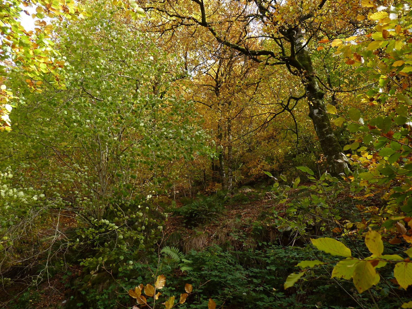 el bosque siempre mágico